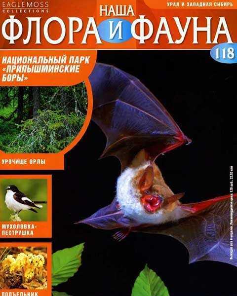 Журнал Наша флора и фауна № 118 (2015) читать PDF