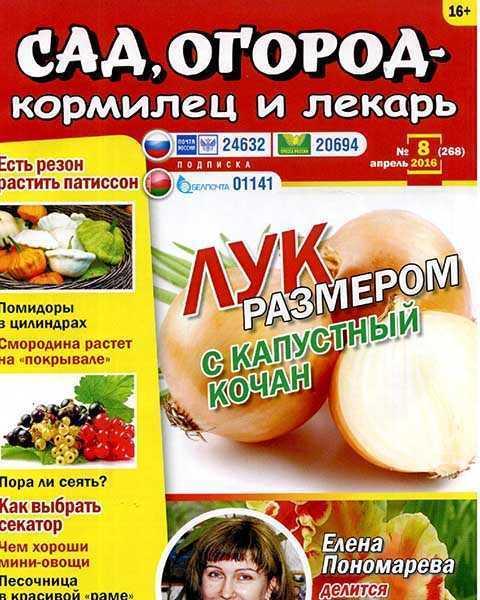 Журнал Сад, огород – кормилец и лекарь №8 (2016) лук